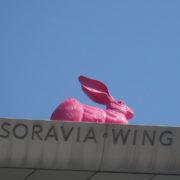 pink rabbit