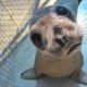 listening seal